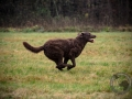 Sea'nLand Chesapekae Bay Retriever