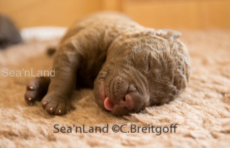 Sea'nLand E-Wurf-Woche 1