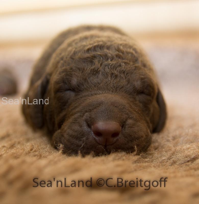 Sea'nLand E-Wurf-Woche 2