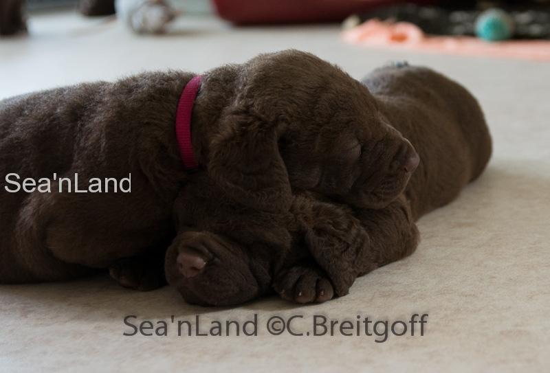 Sea'nLand E-Wurf-Woche 4