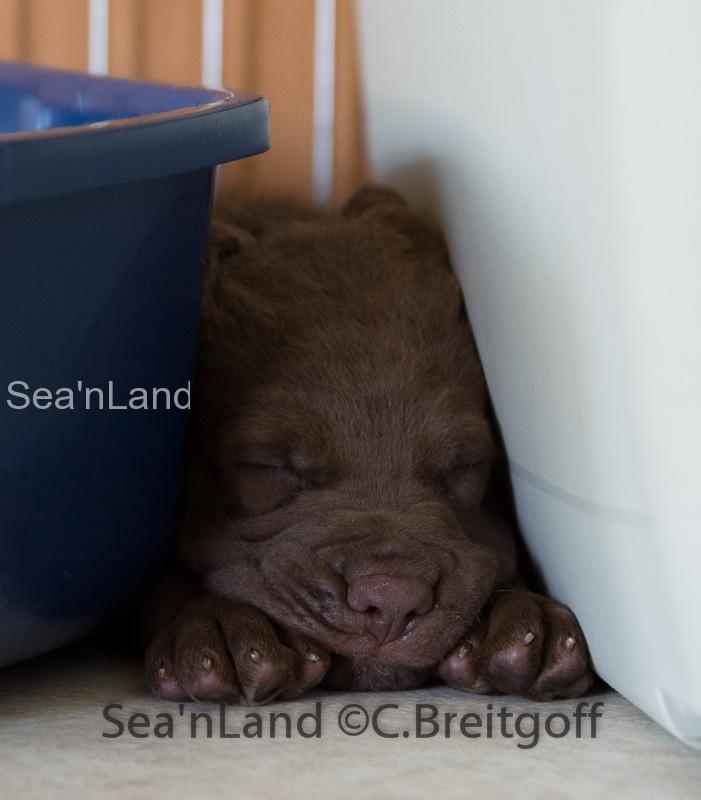 Sea'nLand E-Wurf-Woche 5
