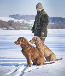 Sea'nLand Chesapeake Bay Retriever - Tala und Moe -©Peter Weissböck