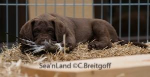 Sea'nLand E-Wurf - Woche 8