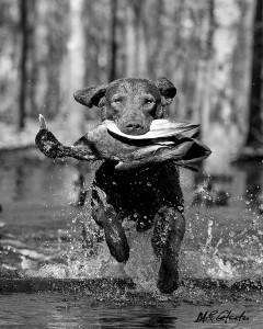 Rippling Waters Jockamo ©UpClose Photo, Mark Atwater