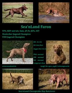 Sea'nLand Faron - Zuchtzulassung